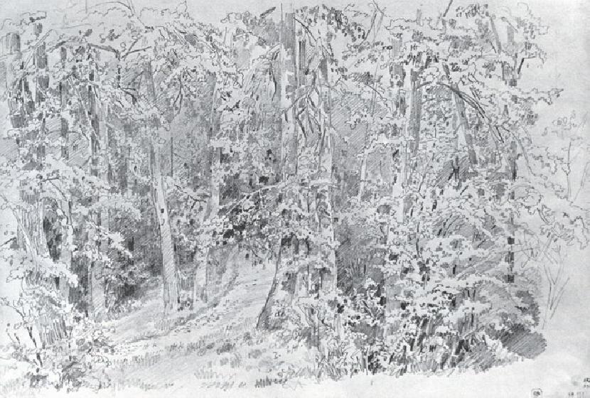 В лиственном лесу.