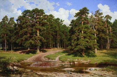 Сосновый бор 1895