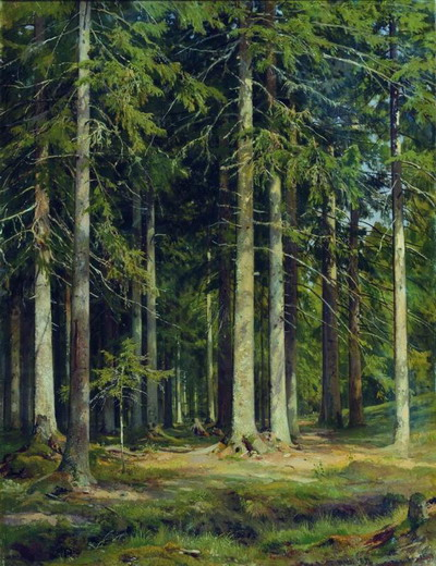 Еловый лес 1891
