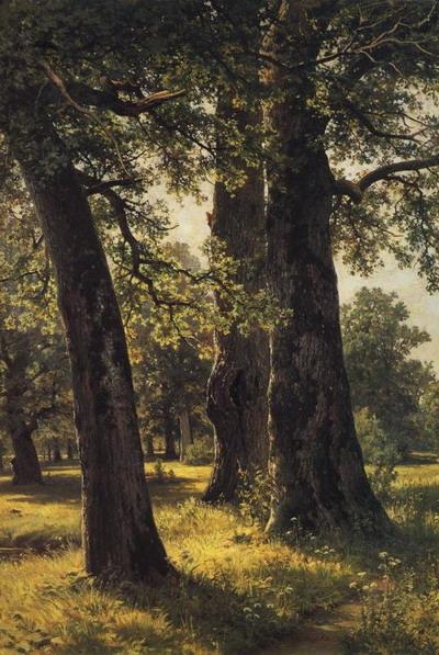Дубы 1887
