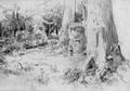 Вырубленный лес - 1880 год