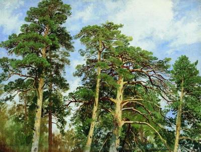 Верхушки сосен 1890