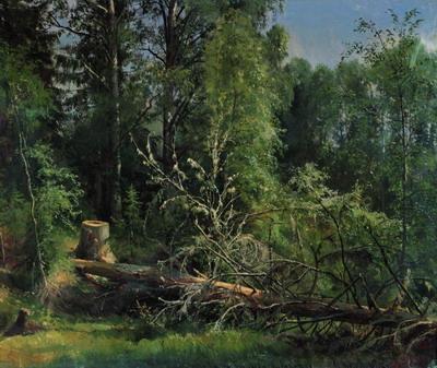 Срубленное дерево 1875