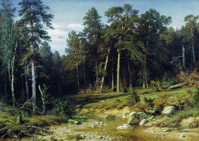 Сосновый бор. Мачтовый лес в Вятской губернии 1872