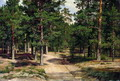 Сестрорецкий бор - 1886 год