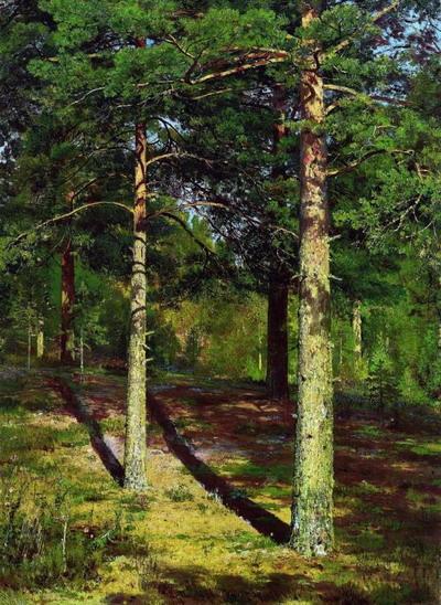 Сосны, освещенные солнцем 1886