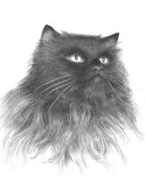 Кошка (Рисунок углём)