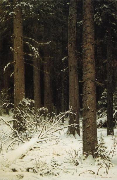 Еловый лес зимой 1884