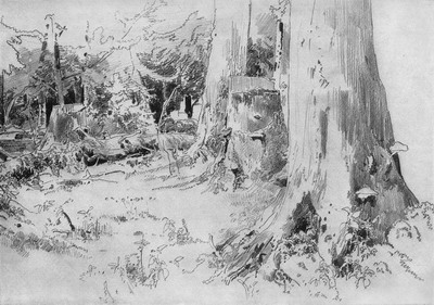 Вырубленный лес 1880