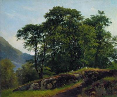 Буковый лес в Швейцарии 1863