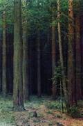 Заповедник. Сосновый бор - 1881 год