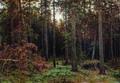 Сосновый лес - 1885 год