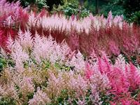 Цветовая гармония в природе