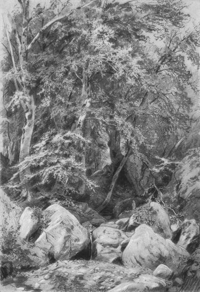 Деревья у ручья на горе Кастель 1879